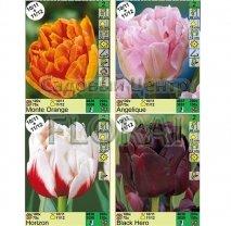 Тюльпаны пионовидные (Double). Микс-1
